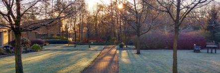 Gardens on winter's morning