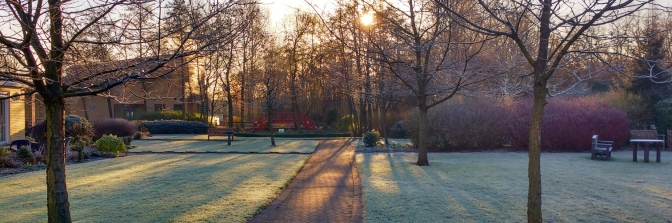 Gardens on winter's morning