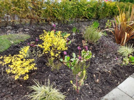 Weeded bed