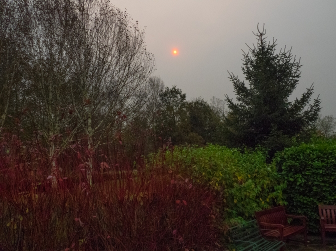 Red Sun and Dogwoods