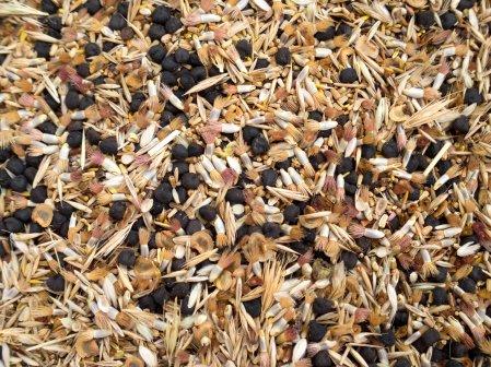 Wilflower seeds